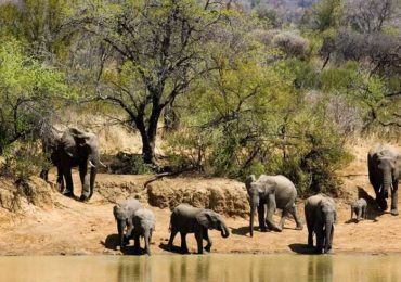 Pilanesberg-National-Park-01