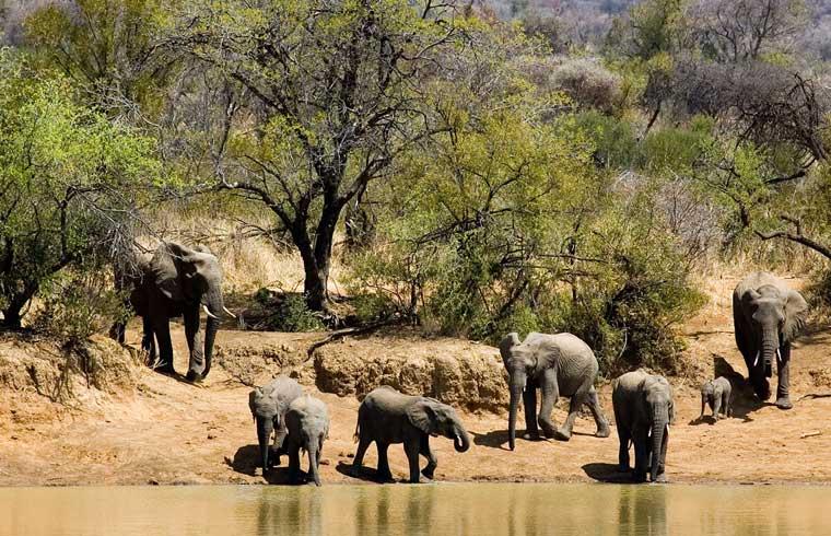 Pilanesberg-National-Park-01