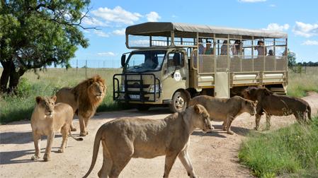 Safari Loin Park