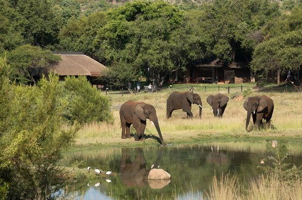 bakubung-bush-lodge-elephants-by-lodge-590×390