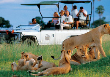 Wildlife-and-Safari